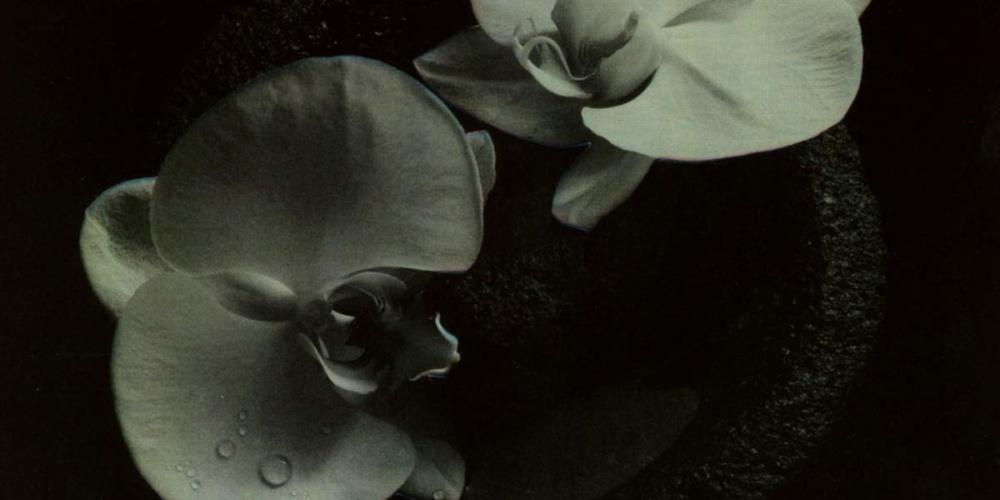 mike-patton-corpse-flower-artwork
